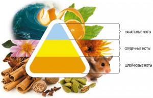 структура аромата (пирамида)
