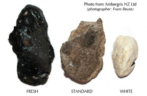 амбра - драгоценный парфюмерный ингредиент