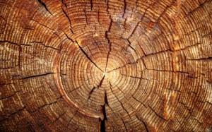 Топ-5 древесных ароматов для женщин