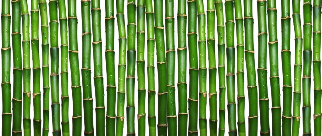 bamboo_texture1595